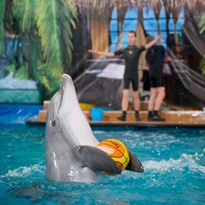 Дельфинарии, океанариумы Заветов Ильича