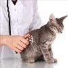 Ветеринарные клиники в Заветах Ильича